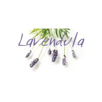 3_lavendula